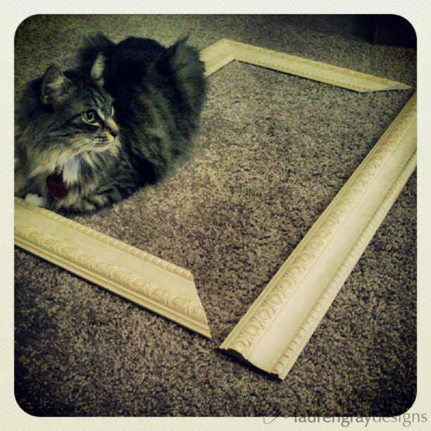 Frame + cat, go figure